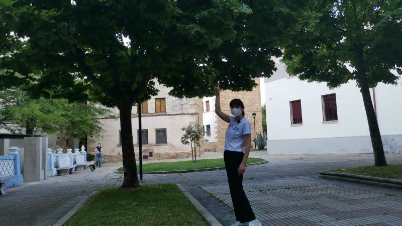 El tilo en Salamanca.